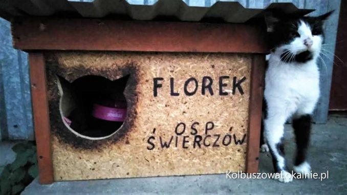 Kot Florek nie żyje. Zginął pod kołami busa